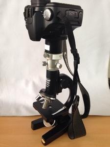 メダカ顕微鏡写真