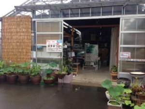 水生植物販売店